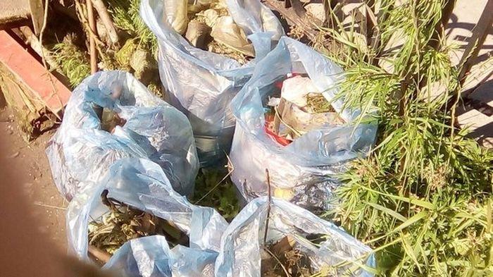 Очистка берега пруда (4 фото)