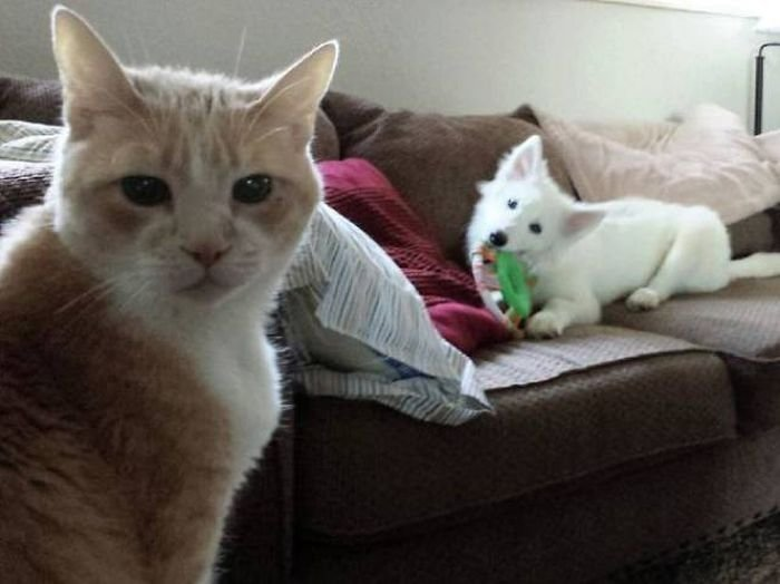 Отношения между кошками и собаками (40 фото)