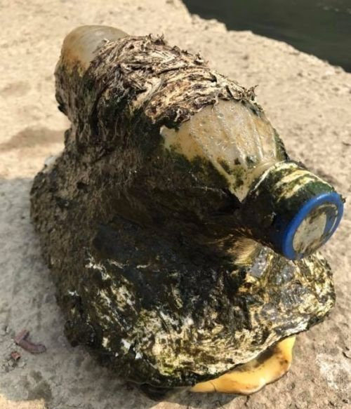 Рыбак обнаружил странную бутылку, оказавшуюся тяжелой ношей для черепахи (4 фото)