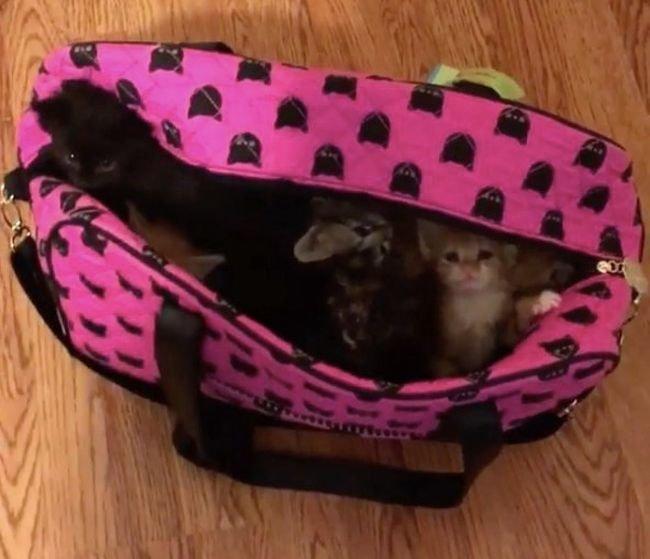 10 крохотных котят и парень (5 фото)