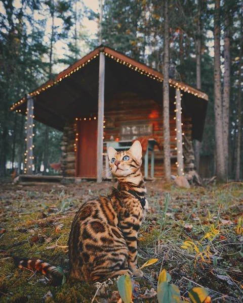 Кошка-путешественница из Канады (36 фото)