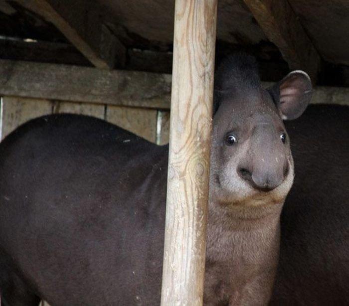 Неудачные фото животных (35 фото)