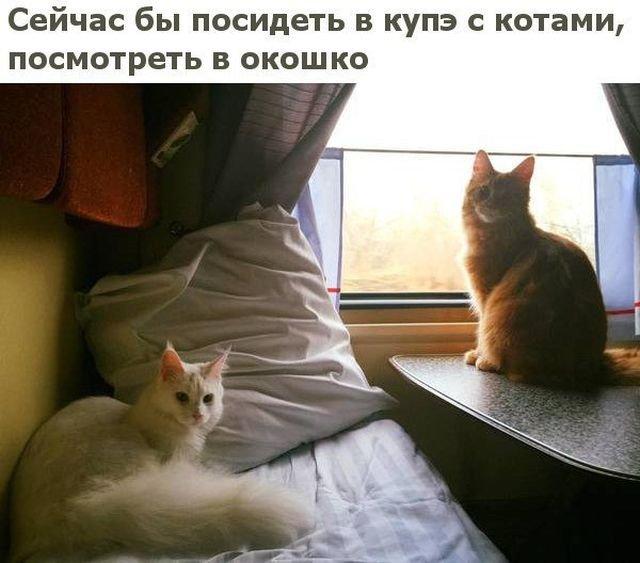 Прикольные картинки (54 фото)