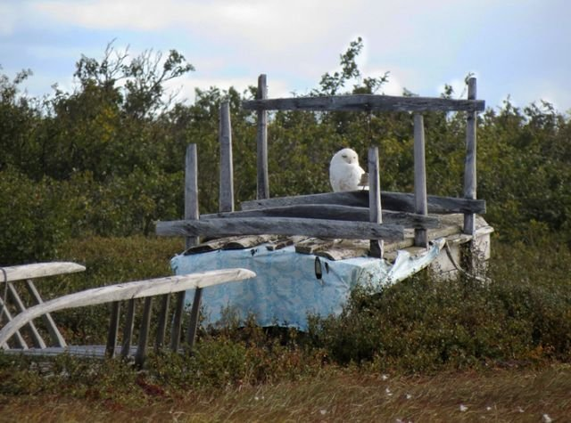 Ненецкое кладбище хальмер (5 фото)