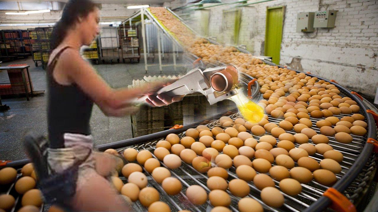 Интеллектуальные технологии - завод сортировки и упаковки куриных яиц
