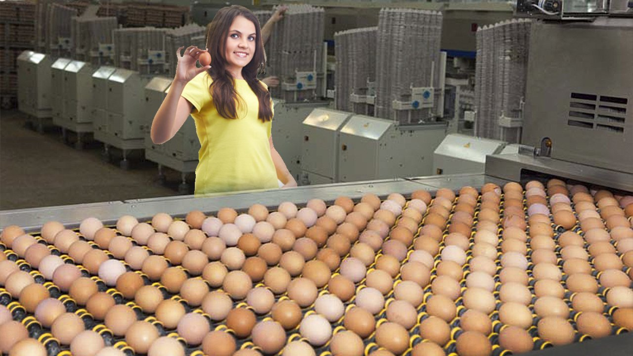 Роботы и фабрики для сортировки яиц
