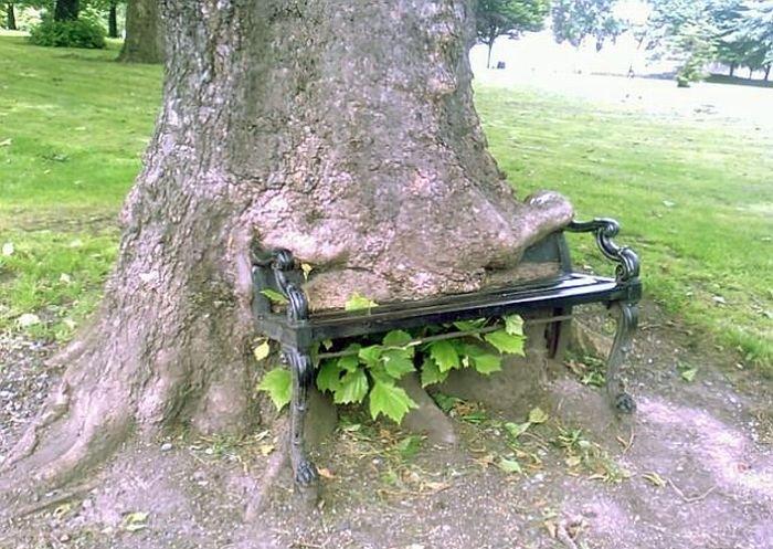 Предметы, люди и животные, застрявшие в деревьях (19 фото)