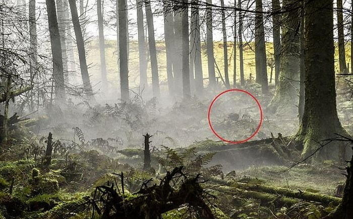 Найдите солдата на этом фото (2 фото)