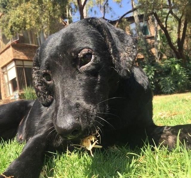 Чудесное преображение собаки (8 фото)