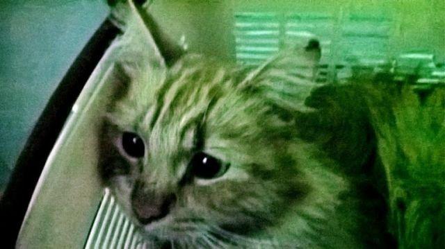 Как серпуховские студенты кота спасли (4 фото)