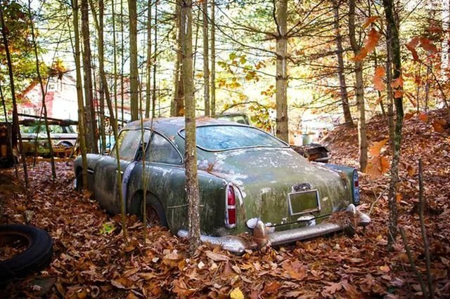 Находка в лесу ценой в 250 000 долларов (10 фото)