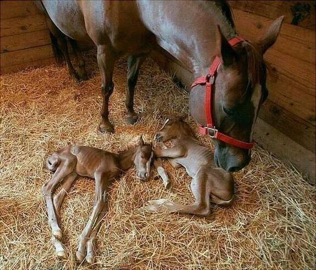 Как выглядят копыта у новорожденных лошадок (4 фото)