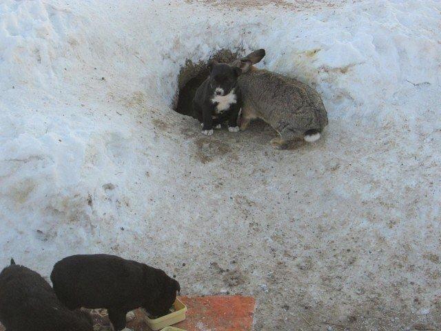 Сердобольный кролик из Омской области заменил щенкам мать (4 фото)
