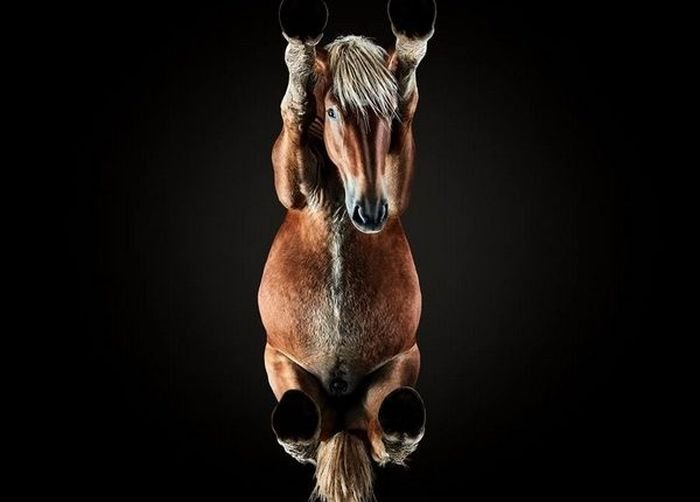 Что осталось за кадром потрясающих фото с лошадьми (14 фото)
