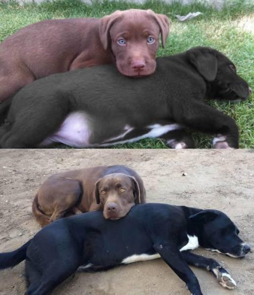 Фото собак, воссозданные спустя время (28 фото)