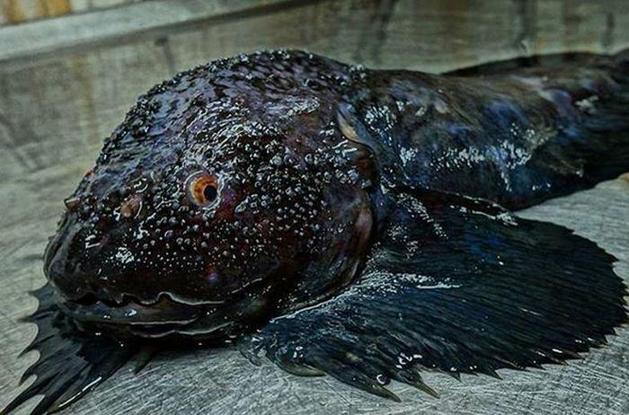 Рыбак фотографирует самых необычных обитателей моря (23 фото)