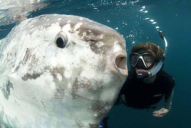 Луна-рыба - рыба, которой удается выживать, несмотря ни на что (13 фото)
