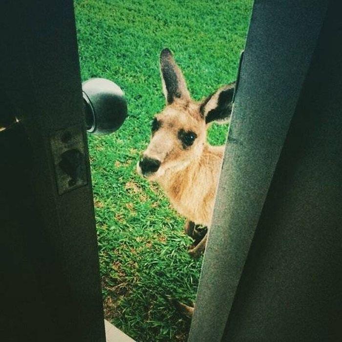 Так выглядят обычные будни в Австралии (37 фото)