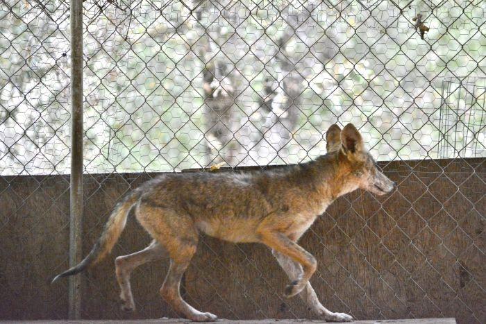 Преображение несчастного животного (12 фото)