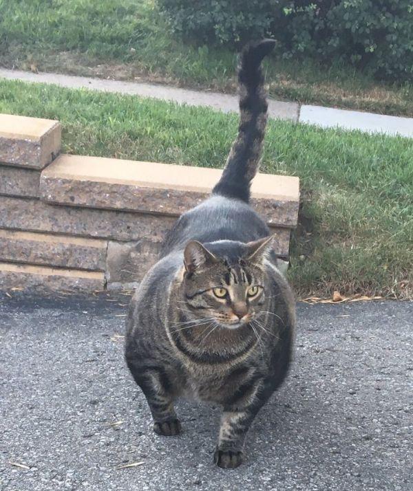 «Кот-качок» удивил пользователей сети (4 фото + видео)