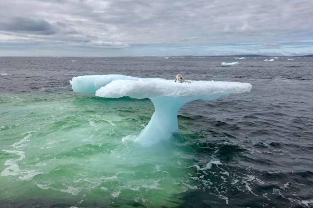Находка на льдине в открытом океане удивила рыбаков (4 фото)