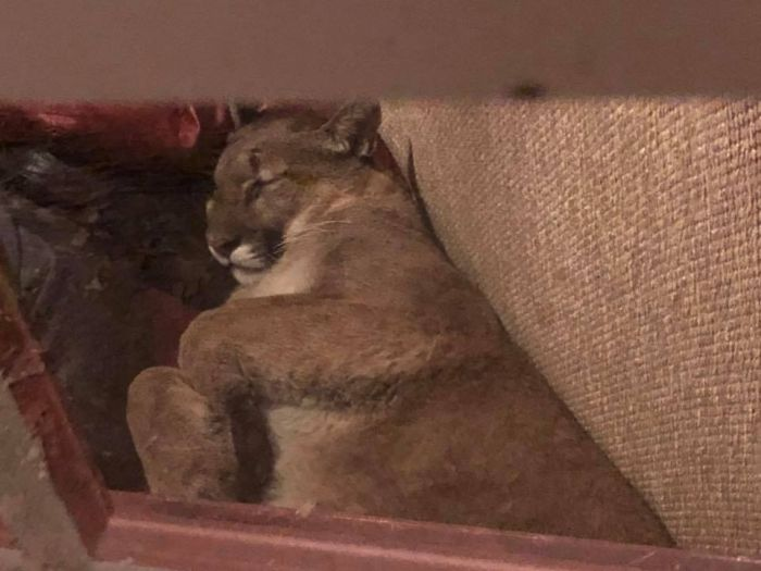 Девушка обнаружила в своем доме незваного гостя (8 фото)
