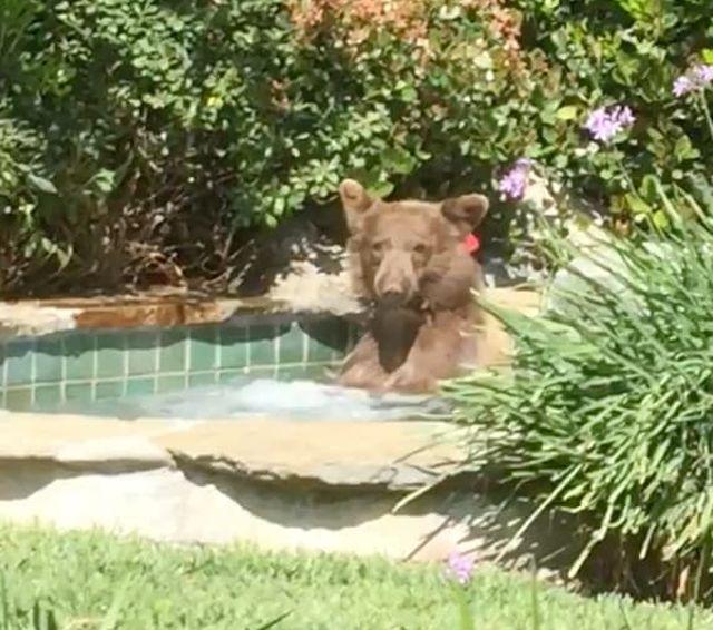 Незваный гость воспользовался хозяйским джакузи во дворе (2 фото + видео)