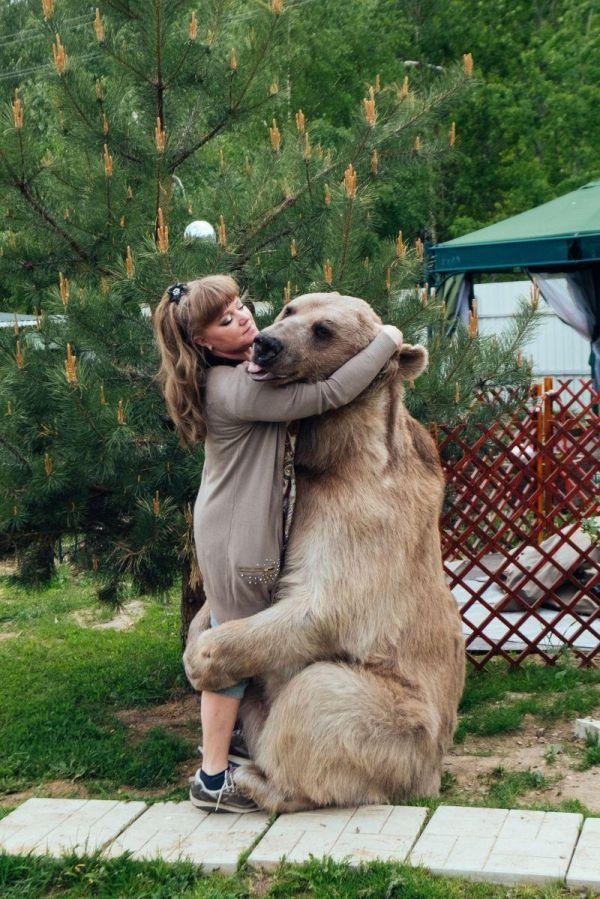 Медведь Степан, который уже 20 лет живет в семье дрессировщиков (7 фото)