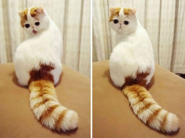 Самые красивые и необычные кошки (29 фото)