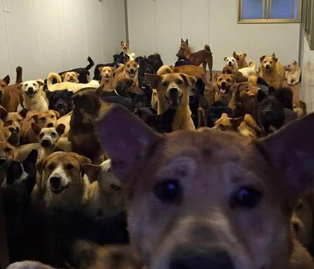 Безопасный приют для собак в Гонконге (5 фото)
