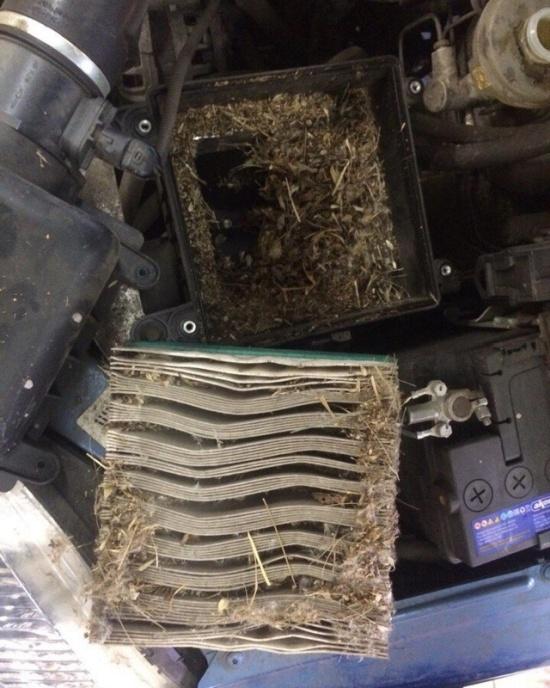 Владелец пригнал Ниву на СТО с жалобами на отсутствие тяги двигателя (3 фото)