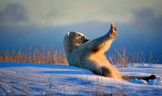 Забавные фотографии диких животных (40 фото)