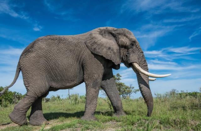 Как устроена слоновья стопа (2 фото)
