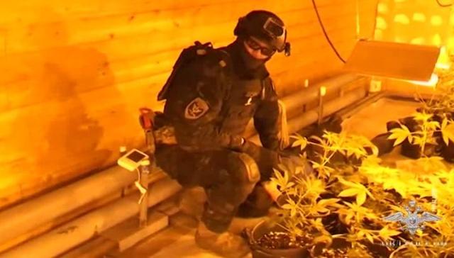 В Архангельске оперативники взяли на абордаж плавучую плантацию марихуаны (2 фото)