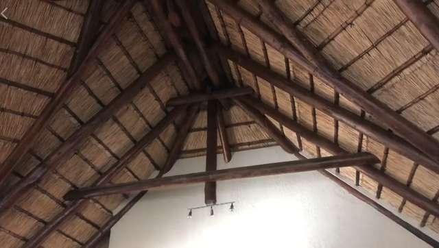 """Необычные """"квартиранты"""" в доме фотографа из Южной Африки (6 фото)"""