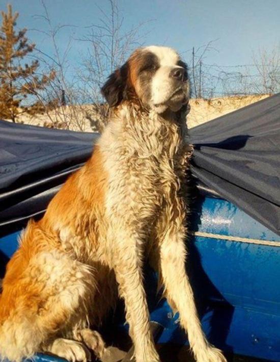 В Забайкалье спасатели случайно обнаружили пса, который попал в беду (3 фото)