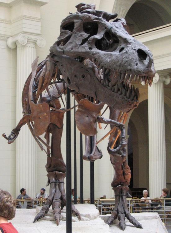 Сколько стоят динозавры в наши дни? (10 фото)