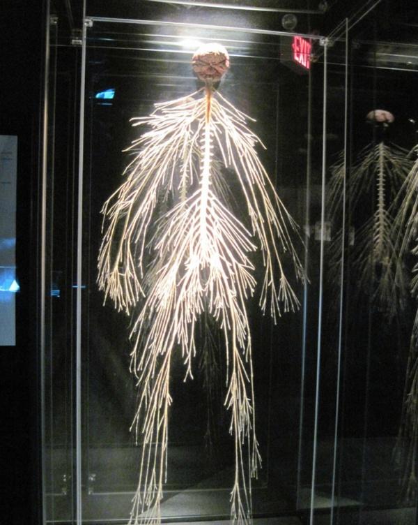 Интересные изображения, которые расскажут о теле человека лучше любого учебника (21 фото)
