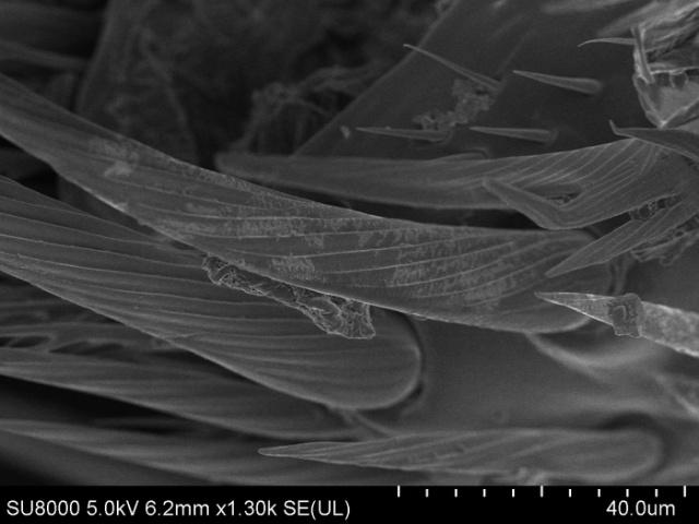 Обычная пчела под электронным микроскопом выглядит, как пришелец с другой планеты (16 фото)