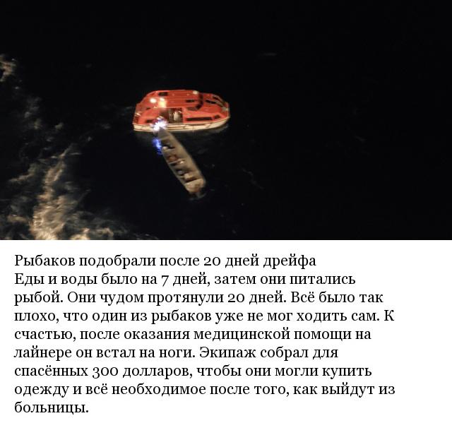 Океанский лайнер поменял курс из-за шторма и совершил настоящее рождественское чудо (5 фото)