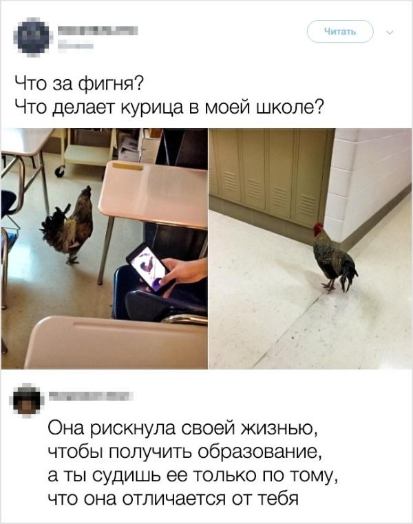 Забавные комментарии из социальных сетей (15 скриншотов)