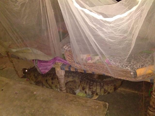 Незваный гость, которого не хотелось бы обнаружить под своей кроватью (3 фото)