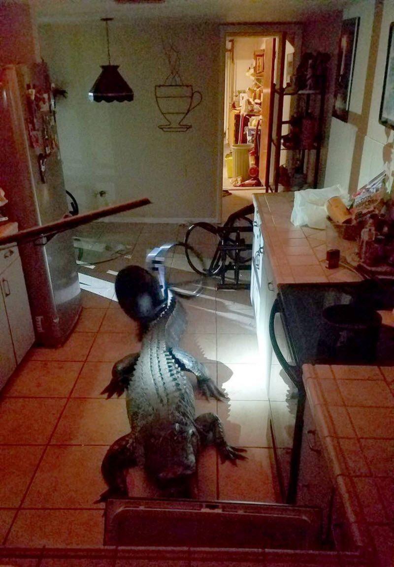 Незваный гость на кухне