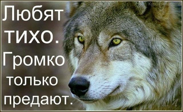 'Пацанская народная мудрость' и цитаты про волков